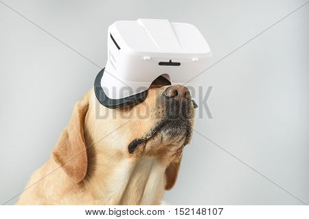 isolated on light grey dog wearing VR glasses with copy space, imagination and simplicity concept