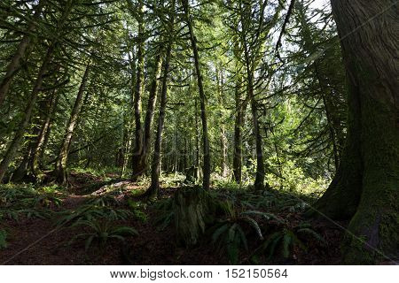 green rain forest in Vancouver BC canada