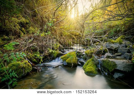 Beautiful landscape with stream and sunbeams through trees. The water stream flowing over rocks.