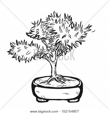 Handdrawn decorative asian bonsai tree in the pot with branched trunk.