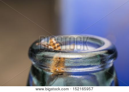 Close Up Glass Bottles With Bee Fly Into Scratching Eating Honeydew Soda.