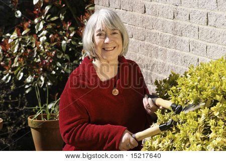 Senior woman gardening with shears in a domestic garden.