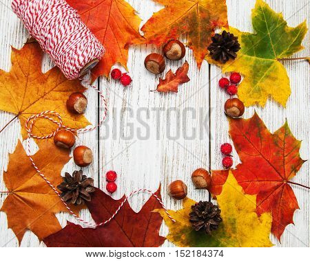 Colorful Autumn Leaves And Hazelnuts