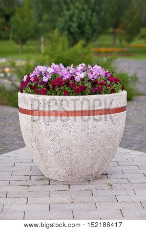 Flowers petunia in a large pot on a park background