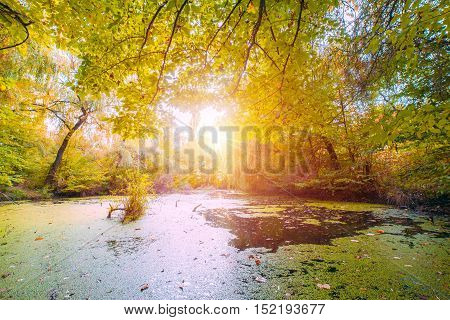 Beautiful autumn swamp scenery Protected wetlands bathed in golden light.