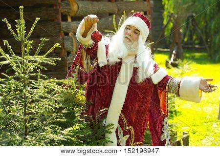 Santa Claus Decorates Christmas Tree