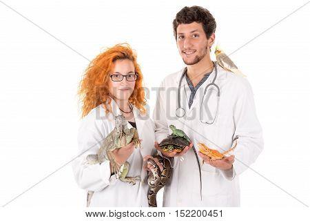 Veterinarian Team