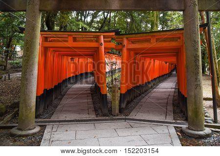 KYOTO JAPAN - NOVEMBER 18 2015 : Red Torii gates in Fushimi Inari shrine one of famous landmarks in Kyoto Japan