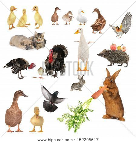 the farming animals isolated on white background