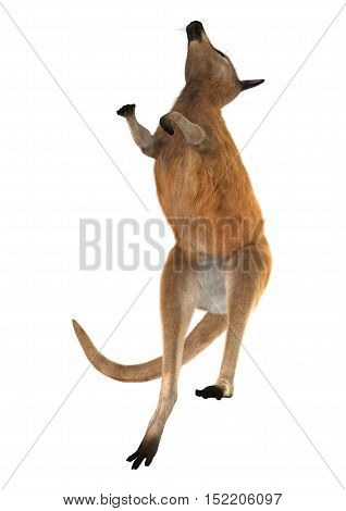 3D rendering of a red kangaroo isolated on white background