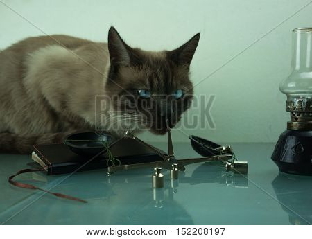 scales with weights, kerosene lamp and a cat with blue eyes.