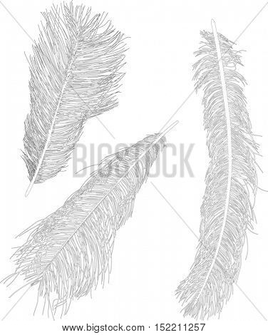 illustration with three ostrich feather silhouettes isolated on white background