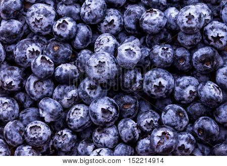 Close up fresh picked blueberries as background