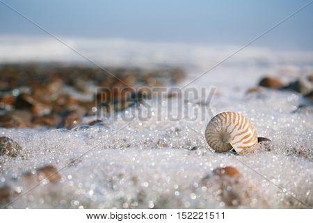 nautilus sea shell with seafoam on Atlantic ocean Legzira beach, morocco