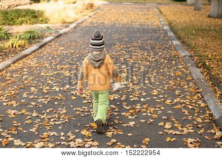 child goes on the road strewn with autumn leaves.