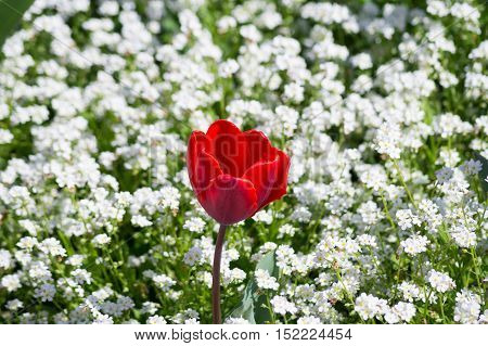 Focus on a Red Flower. Beautiful red flowers