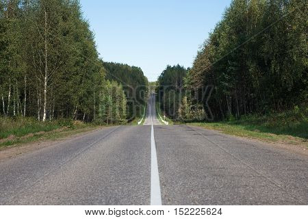 Direct asphalt road surrounded by green trees in summer