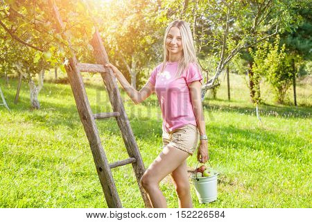 Young Woman With A Ladder Picking Apples From An Apple Tree