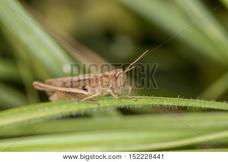Grasshopper Sitting On The Grass