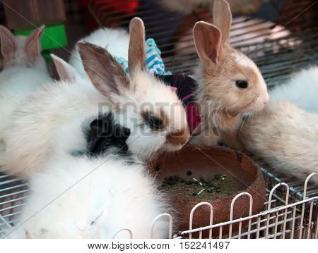Rabbit is lovely pet and friend for human