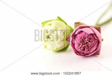 Lotus Flower On White