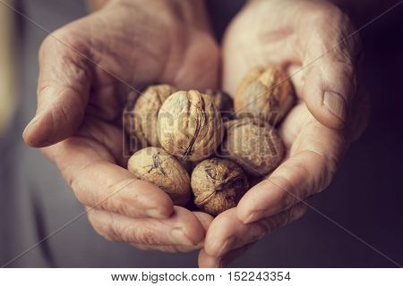 Detail of elderly woman's hands holding a handful of organic walnuts. Selective focus