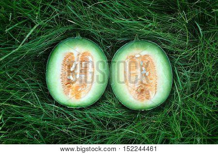 Halves of dwarf yellow lush melon on a green grass. Top view.