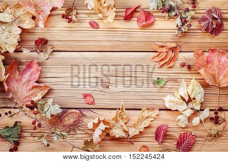 Dry autumn leaves on a wooden background
