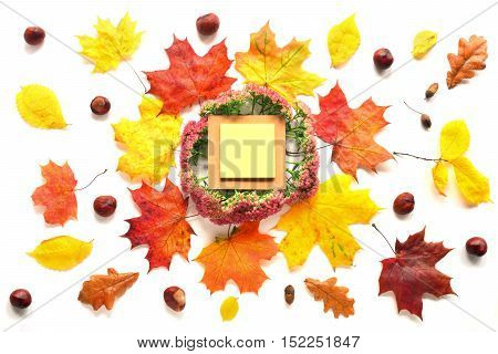 Composition with notebook, chestnuts and autumn leaves. Top view on white background. Autumn flat lay.