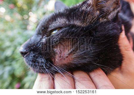 Closeup of dirty hurt cat with injured face