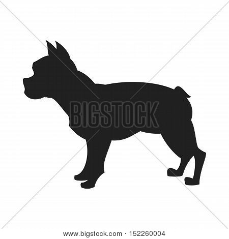 Vintage vector image of a black silhouette of a thoroughbred Bulldog standing straight isolated on white background looking like a shadow of the image.