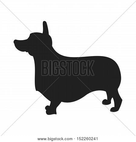 Vintage vector image of a black silhouette of a thoroughbred Corgi Dog standing straight isolated on white background looking like a shadow of the image.