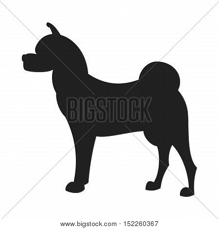 Vintage vector image of a black silhouette of a thoroughbred Akita Dog standing straight isolated on white background looking like a shadow of the image.