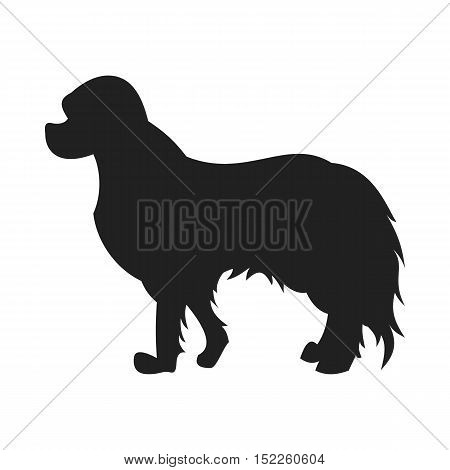 Vintage vector image of a black silhouette of a thoroughbred Spaniel dog standing straight isolated on white background looking like a shadow of the image.