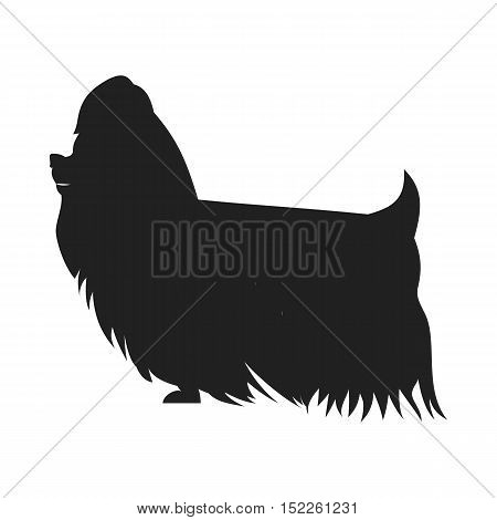 Vintage vector image of a black silhouette of a thoroughbred Yorkshire Terrier dog standing straight isolated on white background looking like a shadow of the image.
