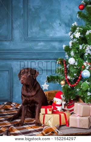 black labrador retriever sitting with gifts on Christmas decorations background