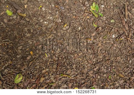 Top View Of Ground With Dried Leaf, Close Up Natural Background