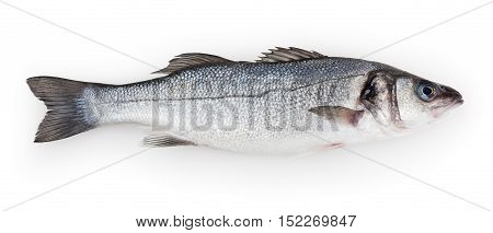 Seabass isolated on white background with clipping path