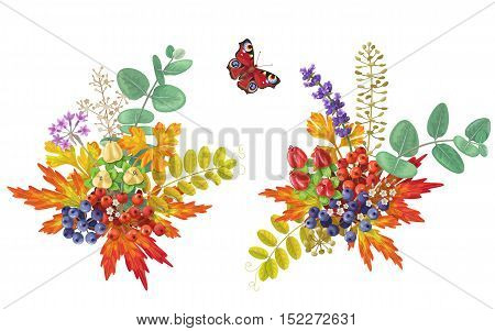 Colorful autumn bouquets with flowers berries and butterfly isolated on white. Fall foliage and berry floral elements decoration.