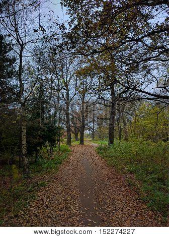 Oak grove in autumn, Moscow region, Russia