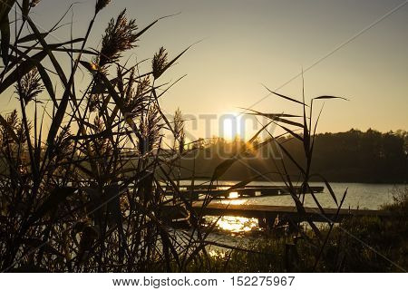 Lake with dry canes at sunset near pier