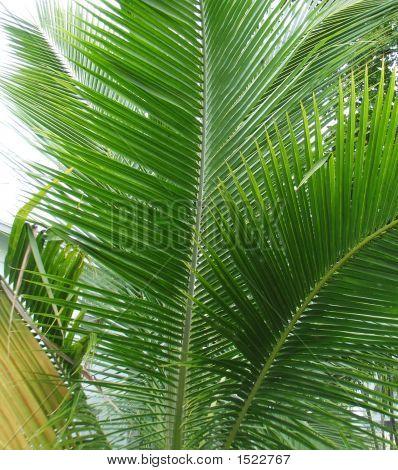 Palm_Leaf_3