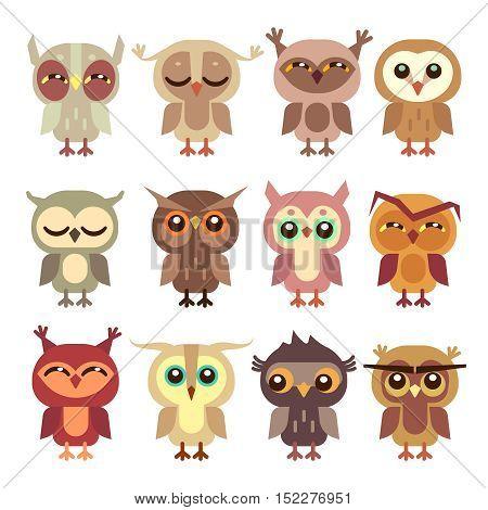 Funny cartoon owls vector set. Wild bird predator, little owlet illustration