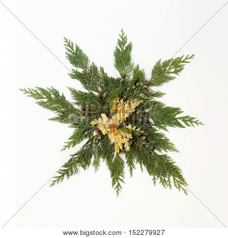 Evergreen leaves arranged in star shape isolated on white background. Flat lay top view. Christmas related composition