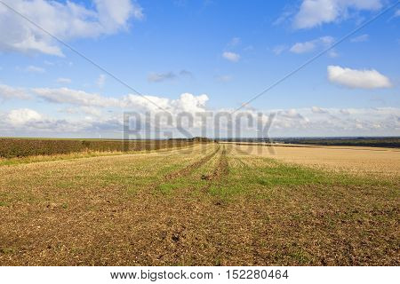 Straw Stubble Field