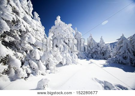 Trees covered with hoarfrost and snow and blue sky in mountains - Christmas background