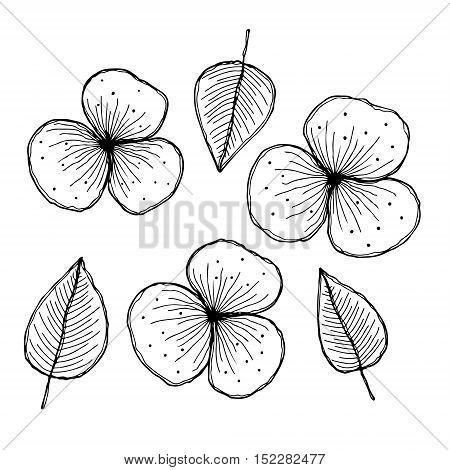 Vector Graphic Hand Drawn Illustration