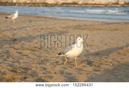 Seagull At The Beach In Summer
