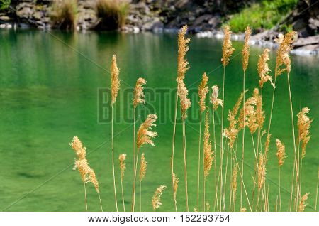 quarry pond with greeny color water and reed.