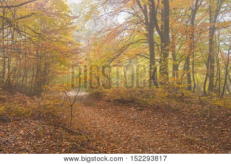 Back road in Crimean forest at misty autumnal day